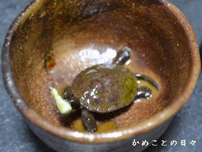 DSC_0608-kame.jpg