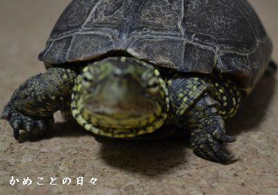 DSC_0625-suke.jpg