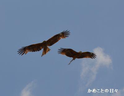 DSC_0664-tobi.jpg