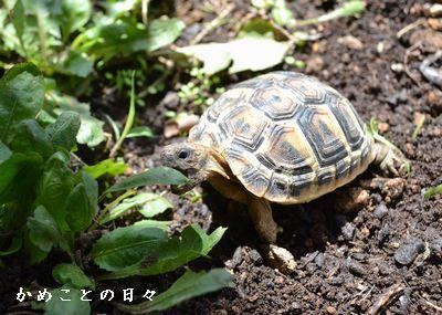 DSC_0725-fu.jpg