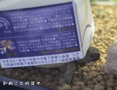 DSC_0736-fu.jpg