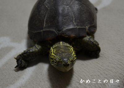 DSC_0744-suke.jpg