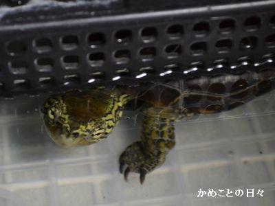 DSC_0850-suke3.jpg