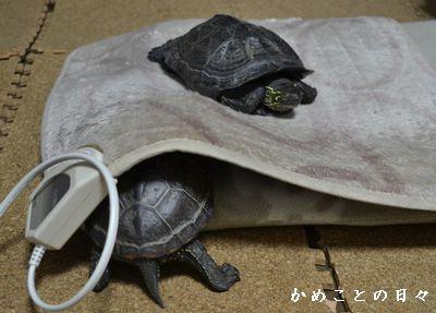 DSC_0856-sukeco.jpg