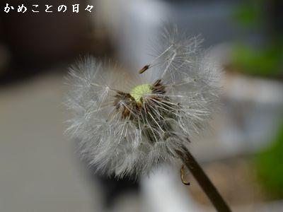 DSC_0895-tan.jpg