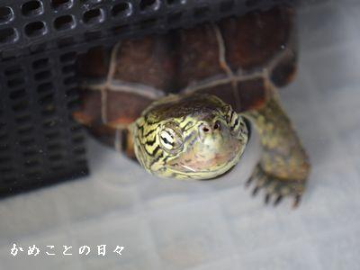 DSC_0927-suke.jpg