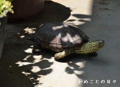 DSC_0932-suke.jpg