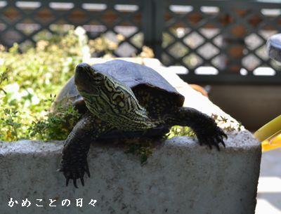 DSC_0953-suke.jpg