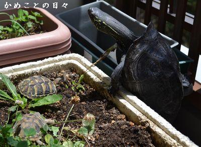 DSC_0965-rikuco.jpg
