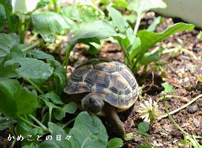DSC_0967-fu.jpg