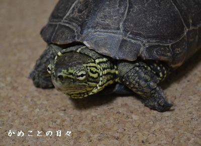 DSC_0969-suke.jpg