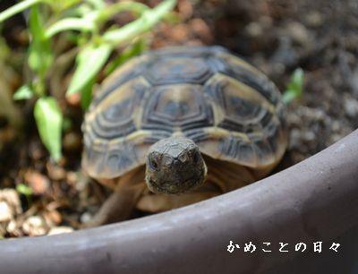 DSC_0977-fu.jpg