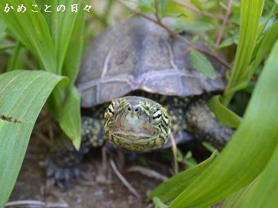 DSC_0994-suke.jpg