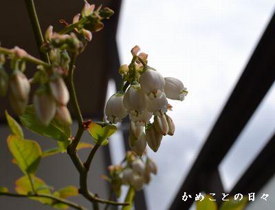DSC_1709-blu.jpg