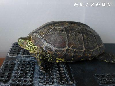 P1010336-suke.jpg