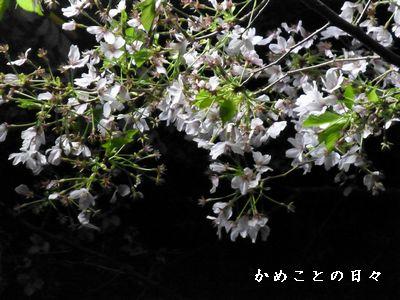 P1010996-saku.jpg