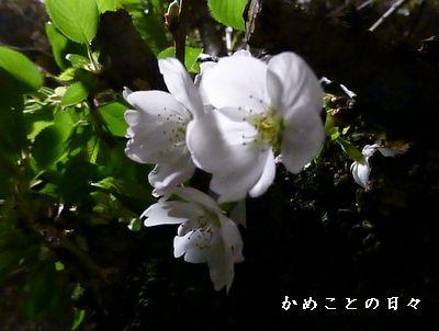 P1020014-saku.jpg