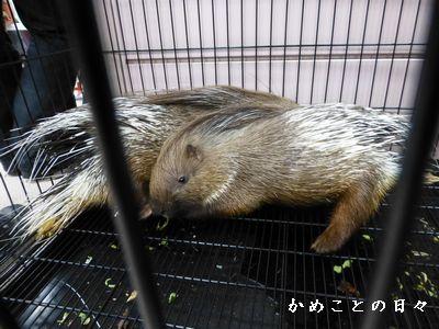 P1030853-yama.jpg