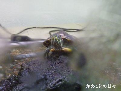 P1840233-midori.jpg