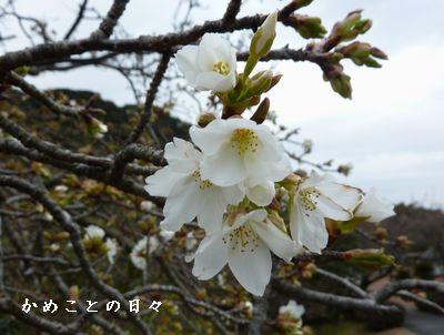 P1890691-saku.jpg