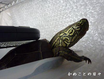 P1900435-suke.jpg