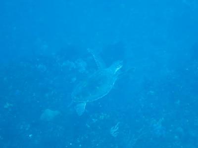 01-20 ウミガメ