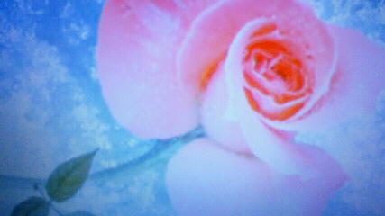 photo326.jpg