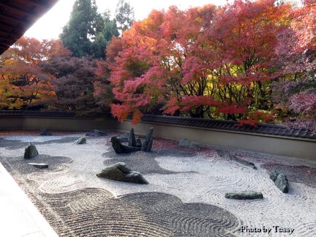 龍吟庵 龍の庭