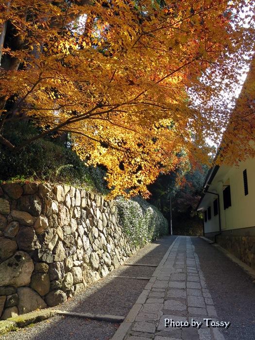 東福寺 黄葉
