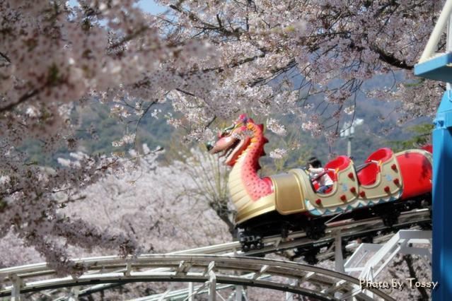 ドラゴンと桜