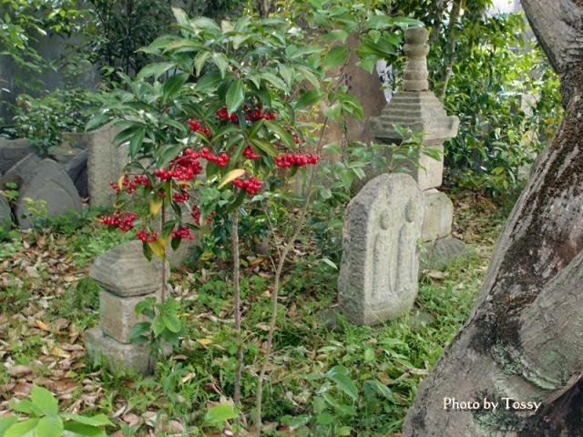 樹の下の石仏 赤い実