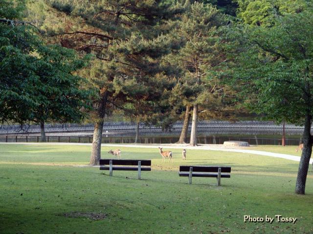 石のベンチのある風景と鹿