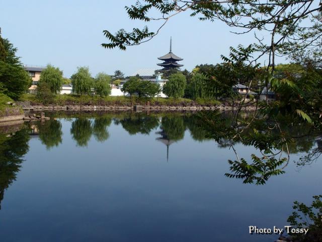 荒池と興福寺五重塔