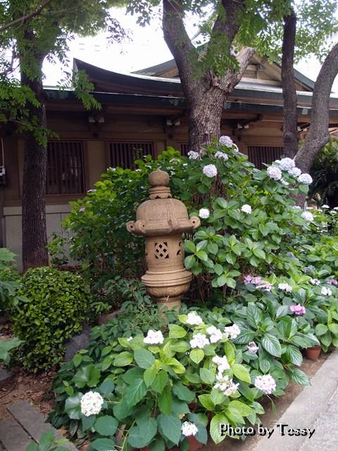 坐摩神社 アジサイと灯篭