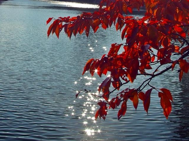 大阪城 お堀の桜紅葉
