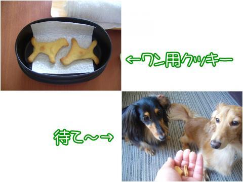 5 20120925 おやつ(ワンコ用)