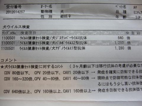 P1130744.jpg