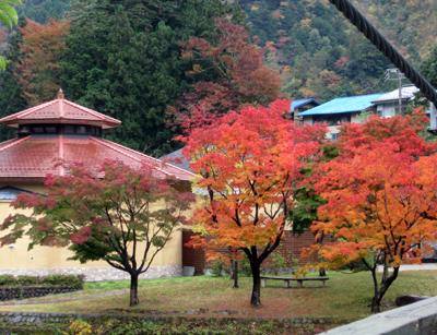 紅葉がすごくきれい!