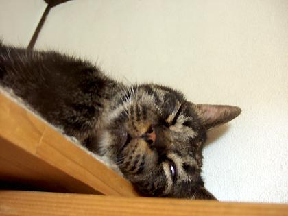 ウインク仕様の寝顔(≧m≦)