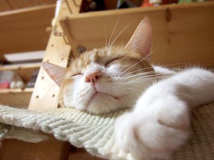 我が家の眠れるノル王子