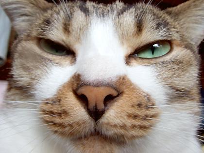 泥棒髭が猫の顔の形になってたりするんですょ、、、