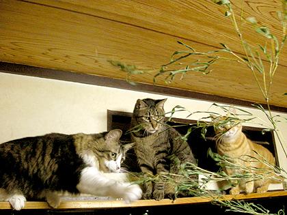 猫繁盛で笹持って遊べ~♪♪