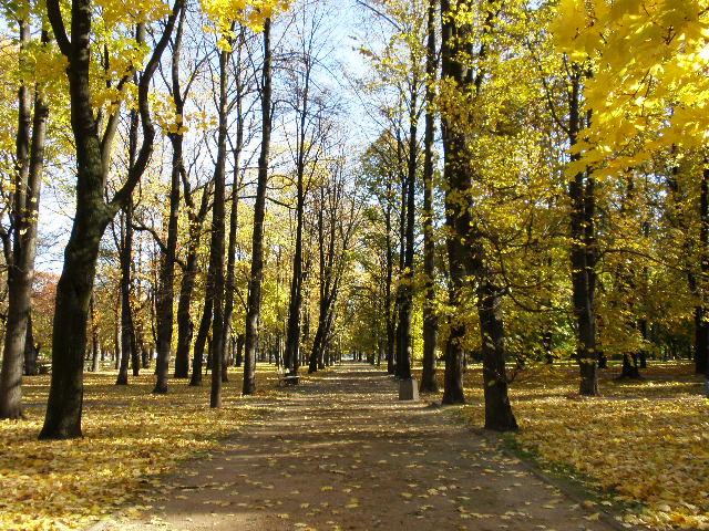 サスキ公園の秋