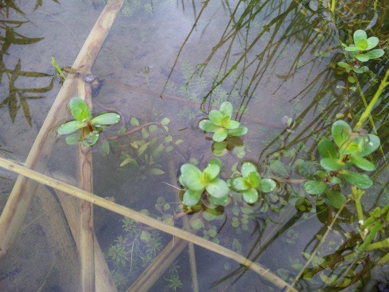 120830_082326湿地
