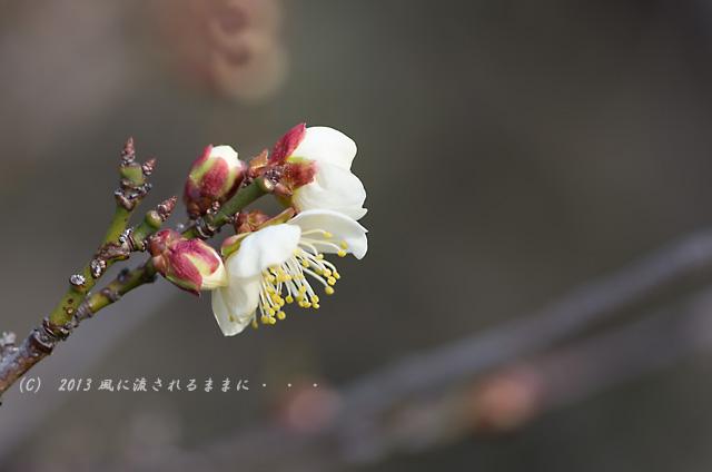 2013120 大阪城梅園 冬至3