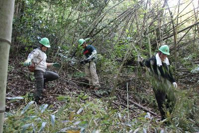 竹林整備で竹刈