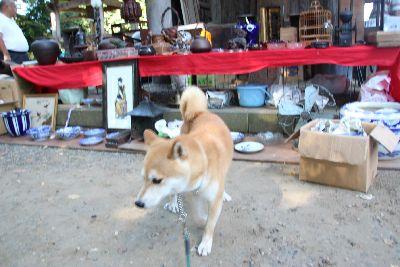 骨董市の柴犬
