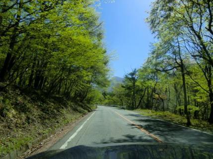 新緑の赤城道路