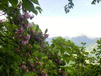 苗場山は雲の中