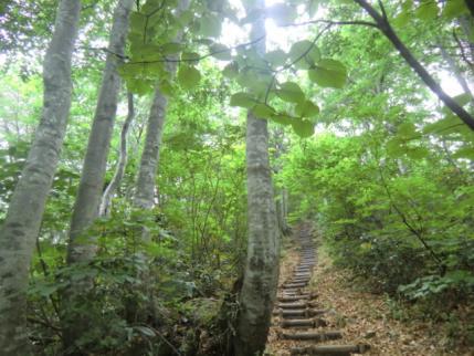 ブナ林の階段道